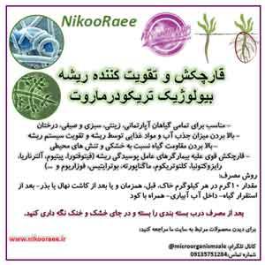 قارچکش-بیولوژیک-تقویت-کننده-ریشه-تریکودرماروت-نیکورایی-www.nikooraee.ir